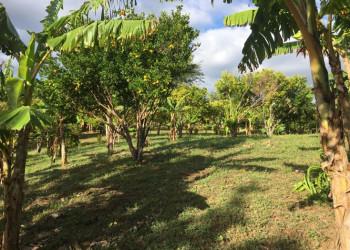 Terreno En Las Crucitas Niquinohomo, Masaya, Nicaragua